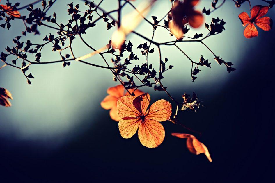 simplicité, spiritualité, médiumnité