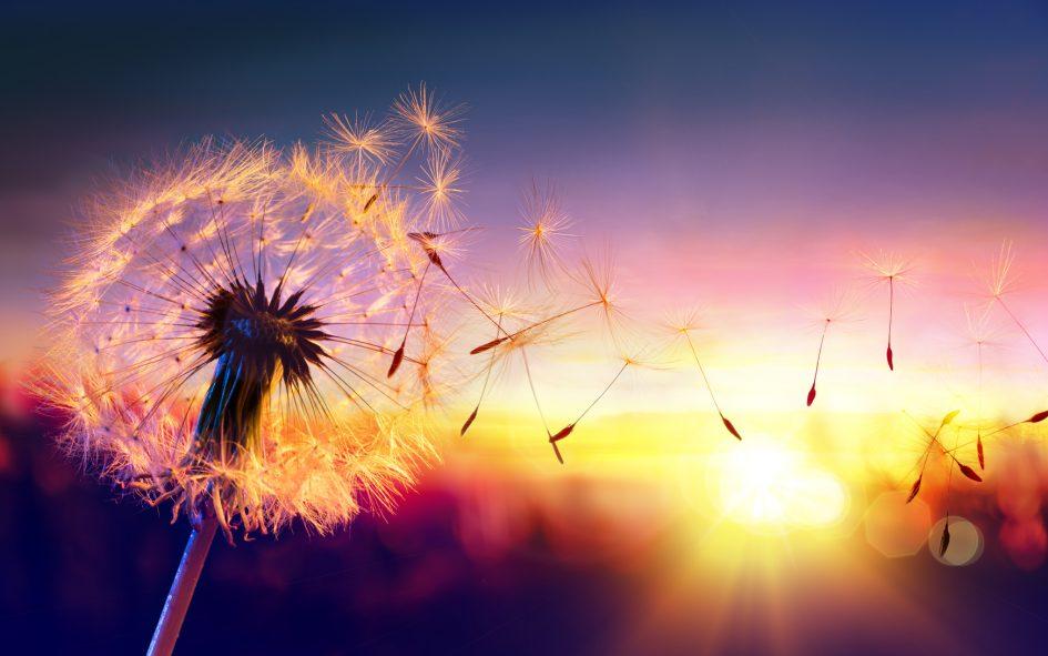 lâcher-prise médiumnité spiritualité