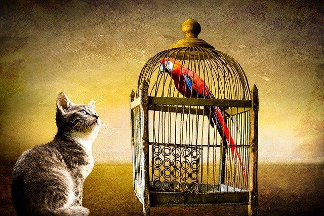 liberté, sécurité, médium, médiumnité